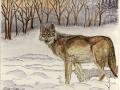wolf-jpg