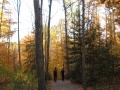 peoplewalkinginwoods-jpg